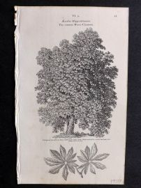 John Loudon 1838 Antique Botanical Tree Print. Common-Horse Chestnut